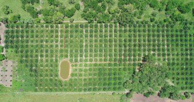 """Desarrollan en la UNACH el proyecto  """"Aplicación de Buenas Prácticas Agrícolas en el Cultivo de Palma de Aceite"""""""