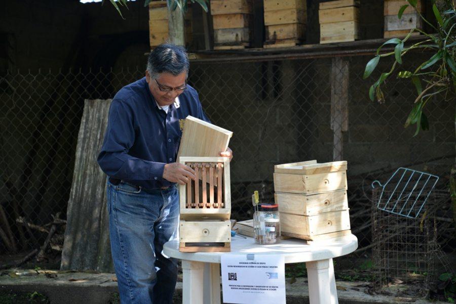 Publicará Investigador de la UNACH  artículo científico sobre abejas nativas del Soconusco