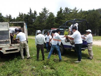 Plantan 10 mil árboles en terrenos de la UNACH en Teopisca